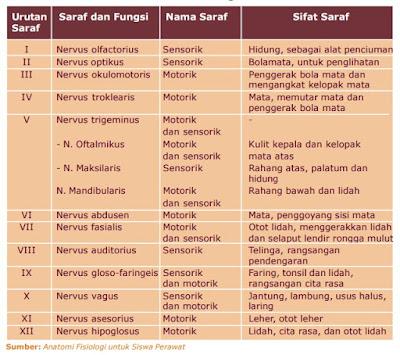 Tabel Sifat dan Fungsi Saraf Otak