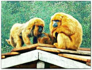 Bugios Ruivos no Telhado de Casinha do Parque Zoológico de Sapucaia