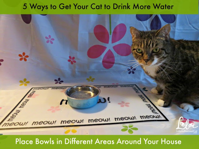 Five Tips to Get Your Cat to Drink More Water