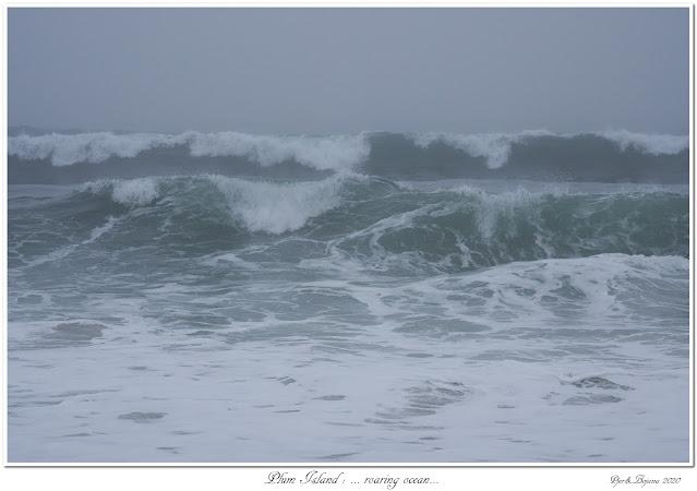 Plum Island: ... roaring ocean...