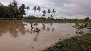 Belum Terdata, Lahan Pertanian di Pringgabaya Akibat Banjir