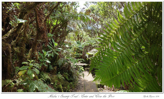 Alaka'i  Swamp Trail: Enter and Close the Door