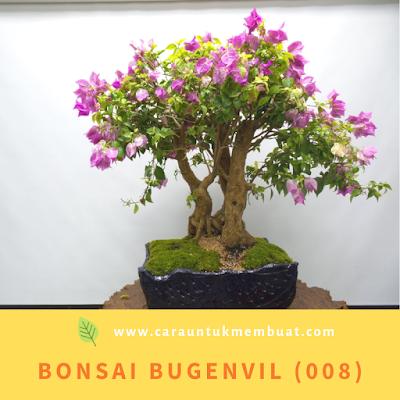 Bonsai Bugenvil (008)