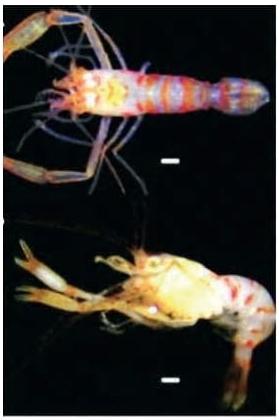 Um grupo de pesquisadores encontrou uma nova espécie de artrópode no litoral de Pernambuco, praia dos Carneiros, e resolveu batizá-la em homenagem ao cantor e compositor Chico Science.