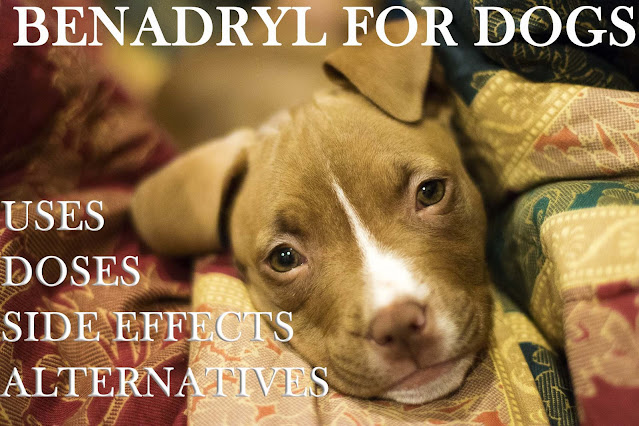 Benadryl for dogs. Is it safe?