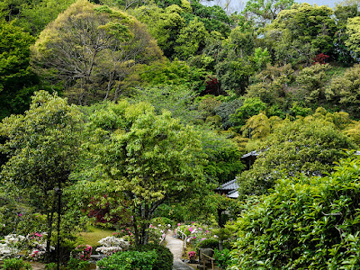 Fresh green foliage: Chojyu-ji