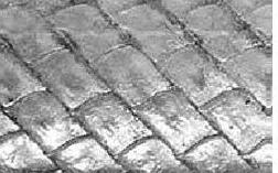 Type sisik ganoid pada family Acipenseridae (sturgeons)