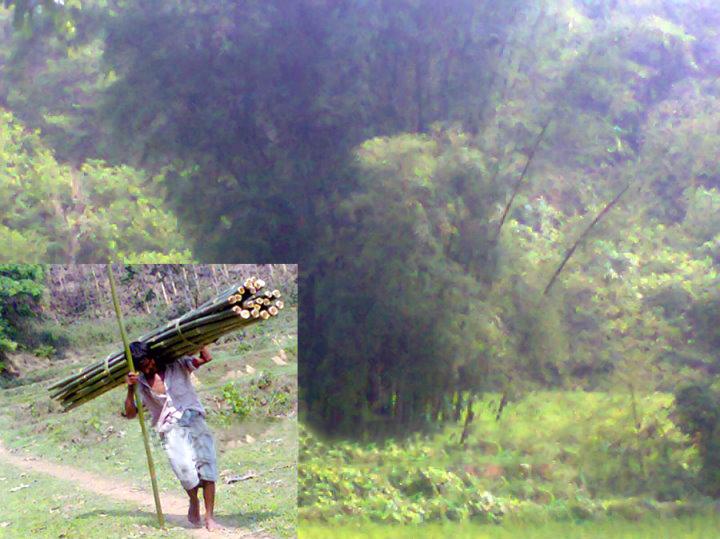 পটিয়ার পূর্বাঞ্চল অভয়ারণ্য পাহাড়ে চলছে অবাধে বৃক্ষ নিধনের মহোৎসব; পটিয়া; চট্টগ্রাম; Patiya; Chittagong; Chattogram