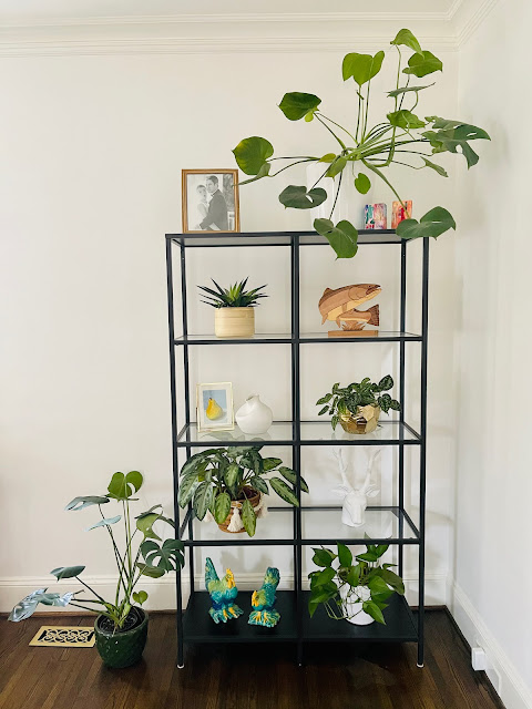 plant decor shelf