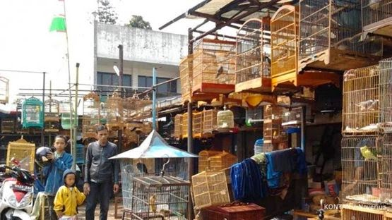 Pasar Burung Sukahaji Bandung