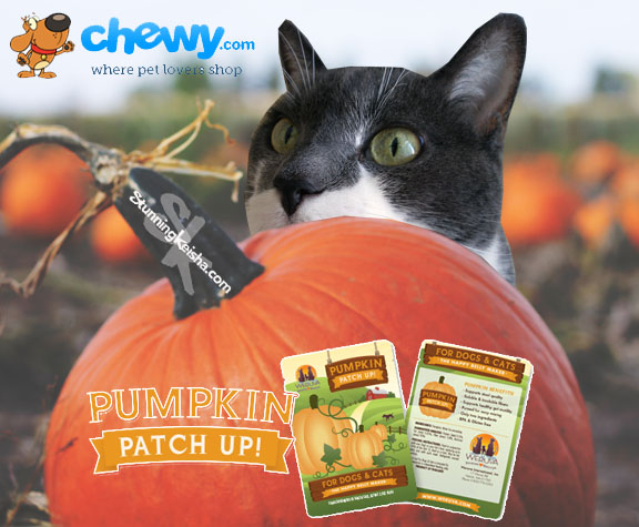Weruva Pumpkin Patch Up! review