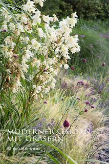 Blumenbeet, moderner Garten, Sommer, Yucca, Staudenbeet, Blumen moderner Garten