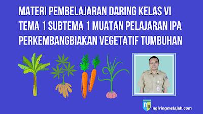 Materi IPA Kelas VI Tema 1 Subtema 1 - Perkembangbiakan Vegetatif Pada Tumbuhan