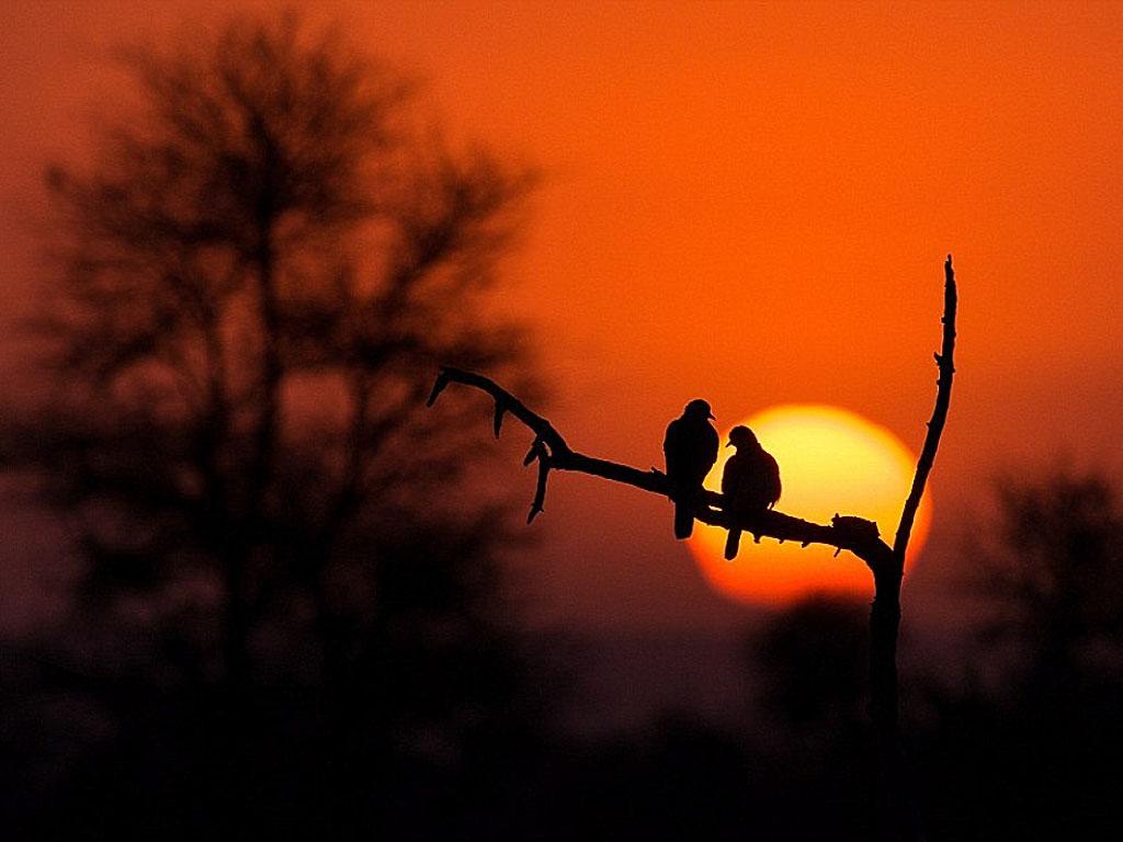 Himig Ng Pag-Ibig  Love Birds Sunset
