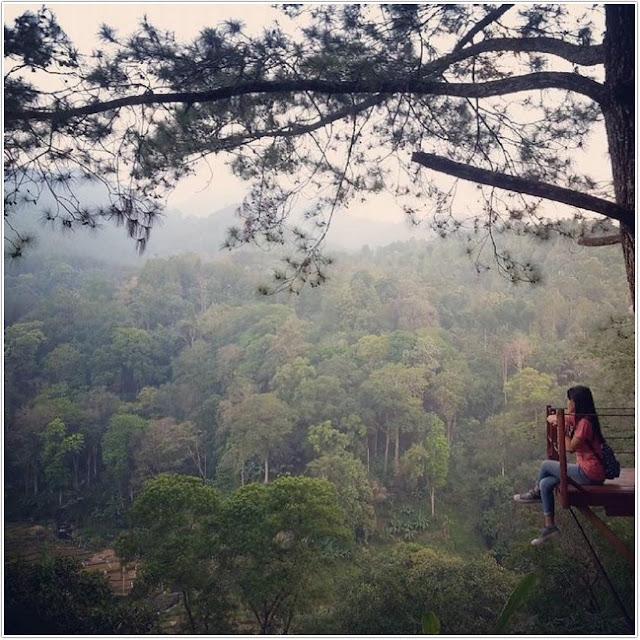 Wisata Hutan Pinus Nongko Ijo;10 Top Destinasi Wisata Madiun