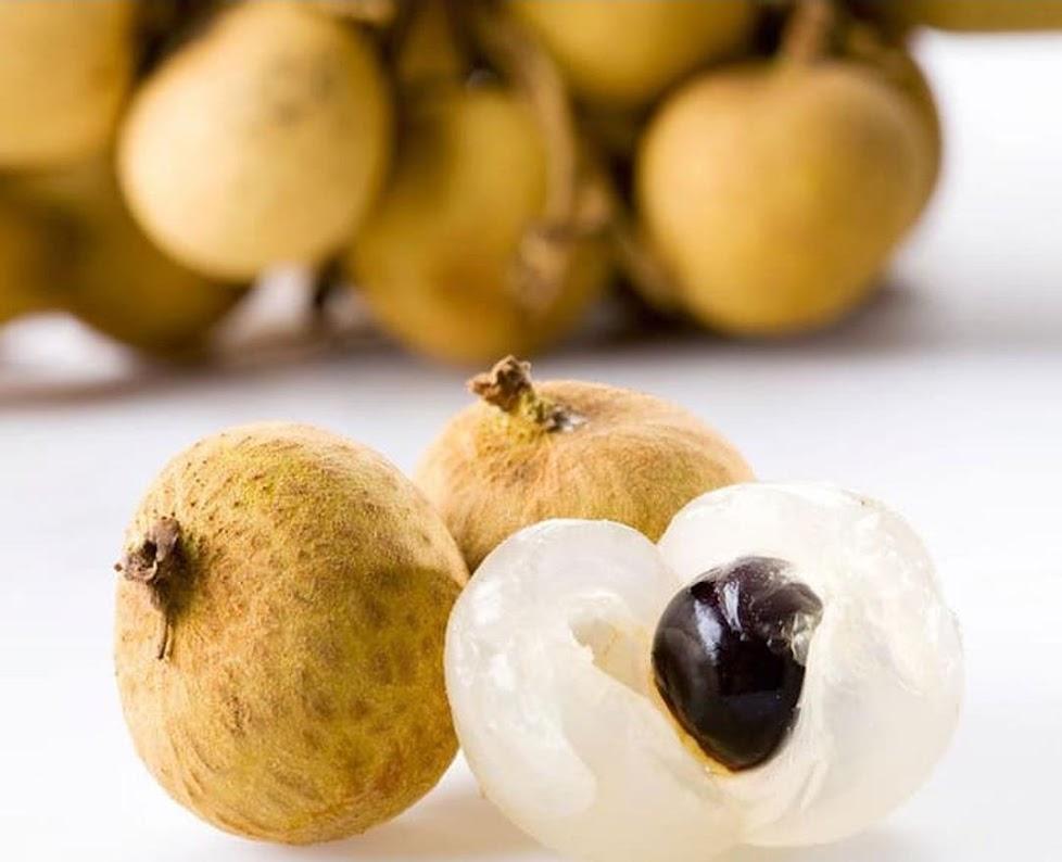 biji benih buah kelengkeng bangkok 10 biji Bengkulu
