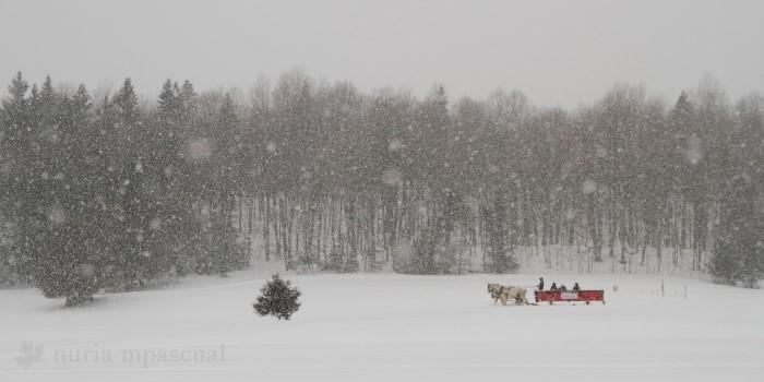 Québec sous la neige