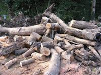 樹木の玉切り