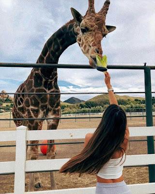 foto tumblr con jirafa