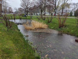 In the heavy rain this past week, the rain garden did its thing