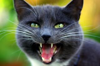 Cómo reaccionar ante los maullidos de tu gato