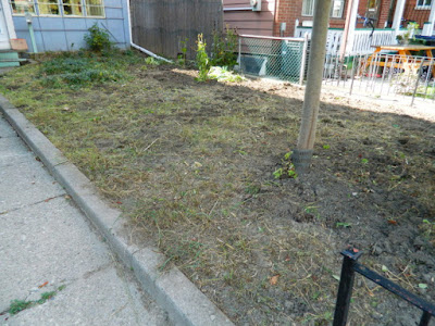 Little Italy Fall Front Garden Cleanup After by Paul Jung Gardening Services--a Toronto Organic Gardening Company