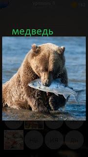 389 фото медведь выходит из воды с пойманной рыбой 9 уровень