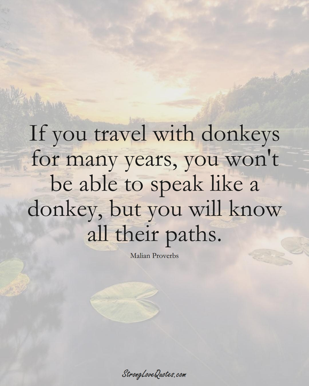 If you travel with donkeys for many years, you won't be able to speak like a donkey, but you will know all their paths. (Malian Sayings);  #AfricanSayings
