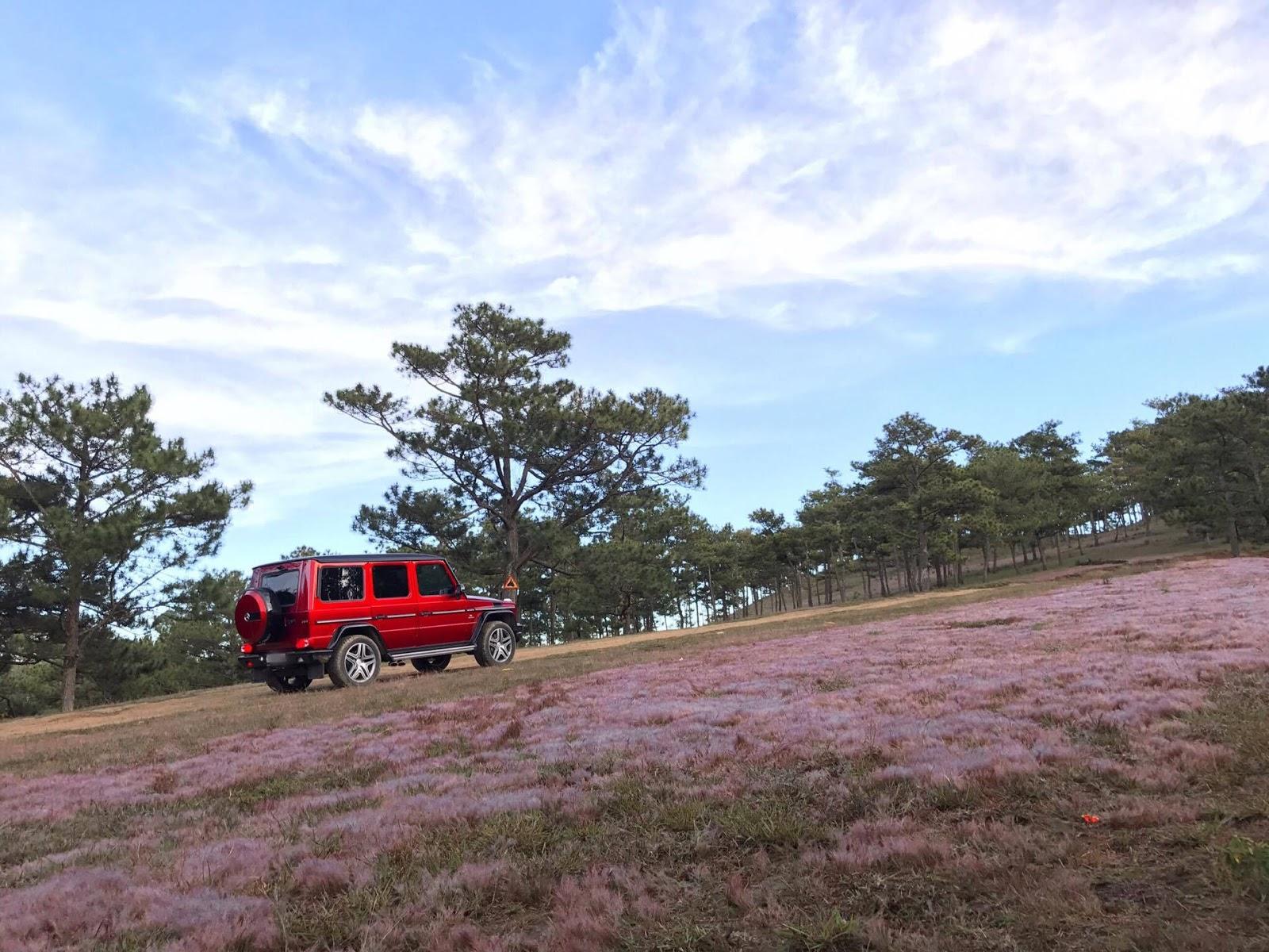 Bắt gặp G63 trên đường đã khó, bắt gặp ngay tại đồi cỏ hồng thì đúng là cảnh xưa nay hiếm
