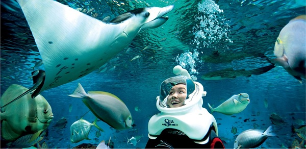 Trải nghiệm cảm giác tản bộ dưới lòng đại dương tại S.E.A Aquarium