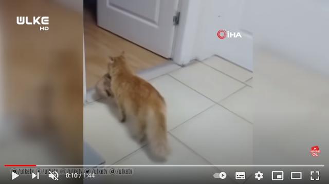 Viral: Συγκινητικό βίντεο γατούλας που μπαίνει σε νοσοκομείο ζητώντας ιατρική βοήθεια για τα γατάκια της
