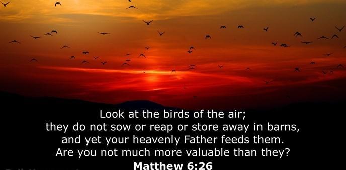 Look at the birds of the air; they do not sow or reap or store away in barns, and yet your heavenly Father feeds them. Are you not much more valuable than they?