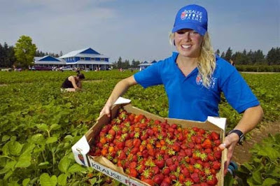 Jobs available at major Canadian farms - apply now