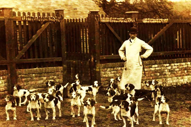 The history of the origins of beagle dogs