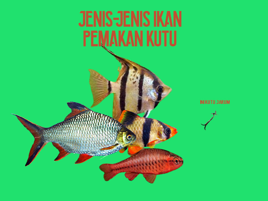Jenis-Jenis Ikan Pemakan Kutu