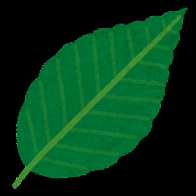 ブナの葉のイラスト