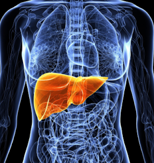 foods good for liver repair