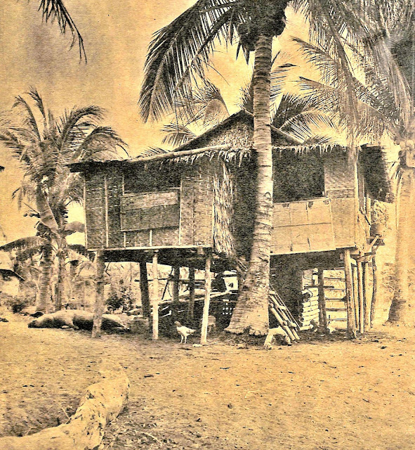 "Caption in The Chronicle Magazine:  ""TALISAY: a typical house of the town is not without its menagerie of hogs, chicken, carabaos and house pets"