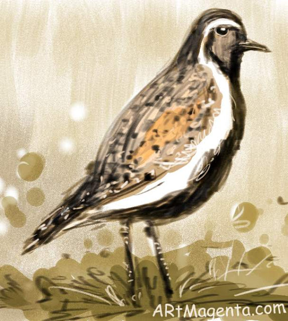 Golden Plover is a bird sketch by artist and illustrator Artmagenta