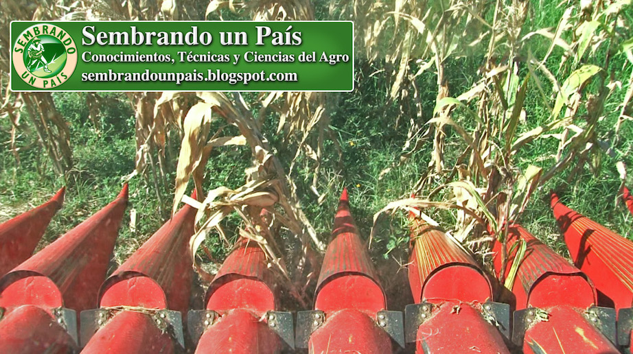 maicero para cosecha mecanizada de maíz