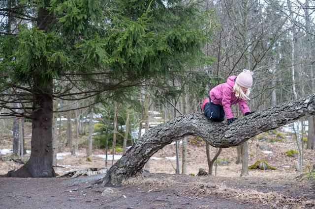 Tyttö kiipeää vaakasuorassa kasvavaa puuta pitkin. Taustalla näkyy oksiaan levittävä suojaava kuusi.