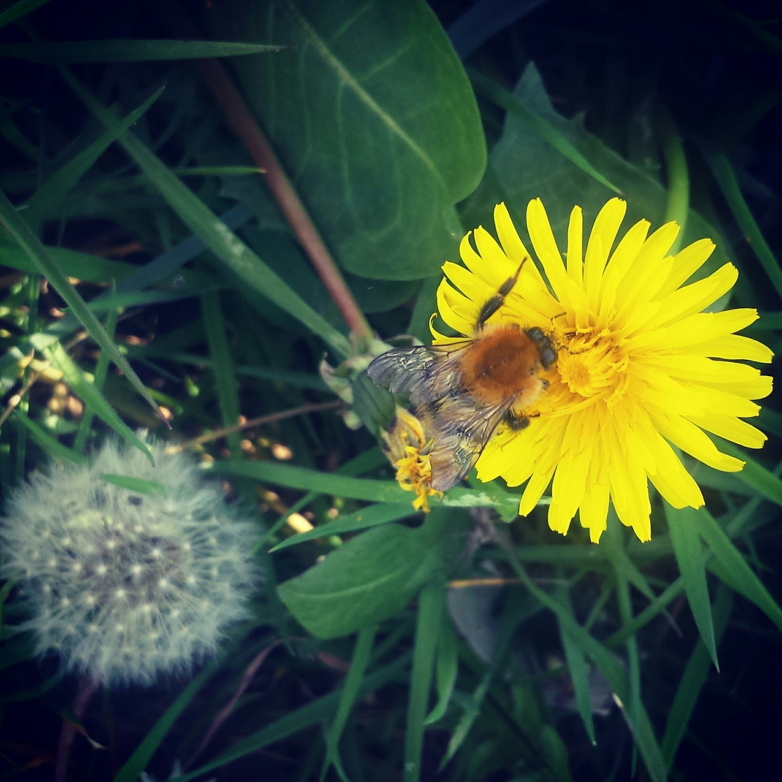 , Spring Garden Wishes