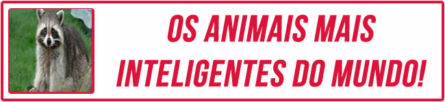 Os animais mais inteligentes do mundo