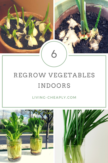 Regrow Vegetables Indoors