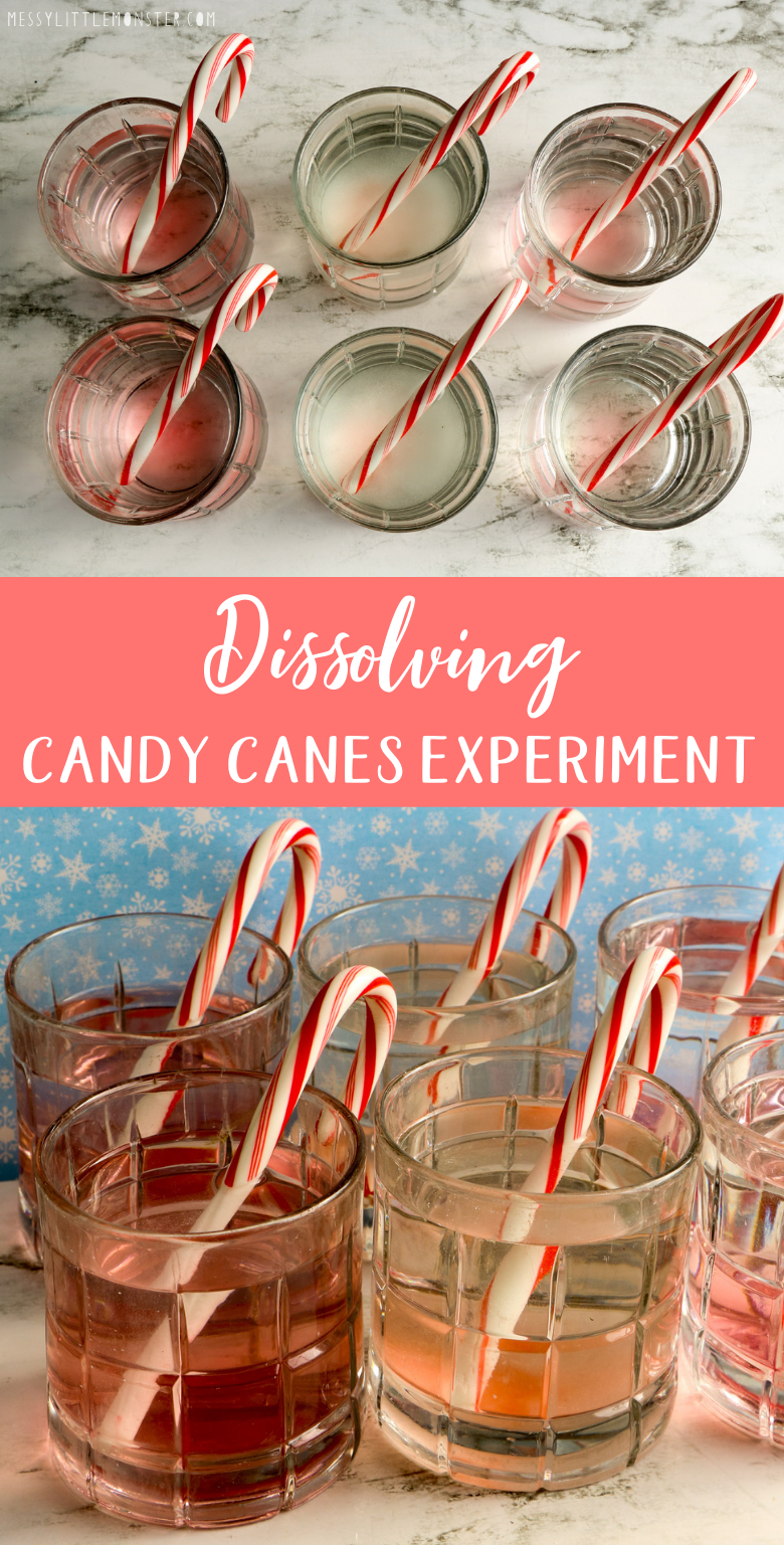 Dissolving candy canes experiment. Christmas candy cane science experiment for kids.
