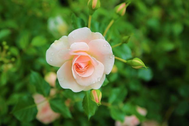 hoa đẹp nhất thế giới 14