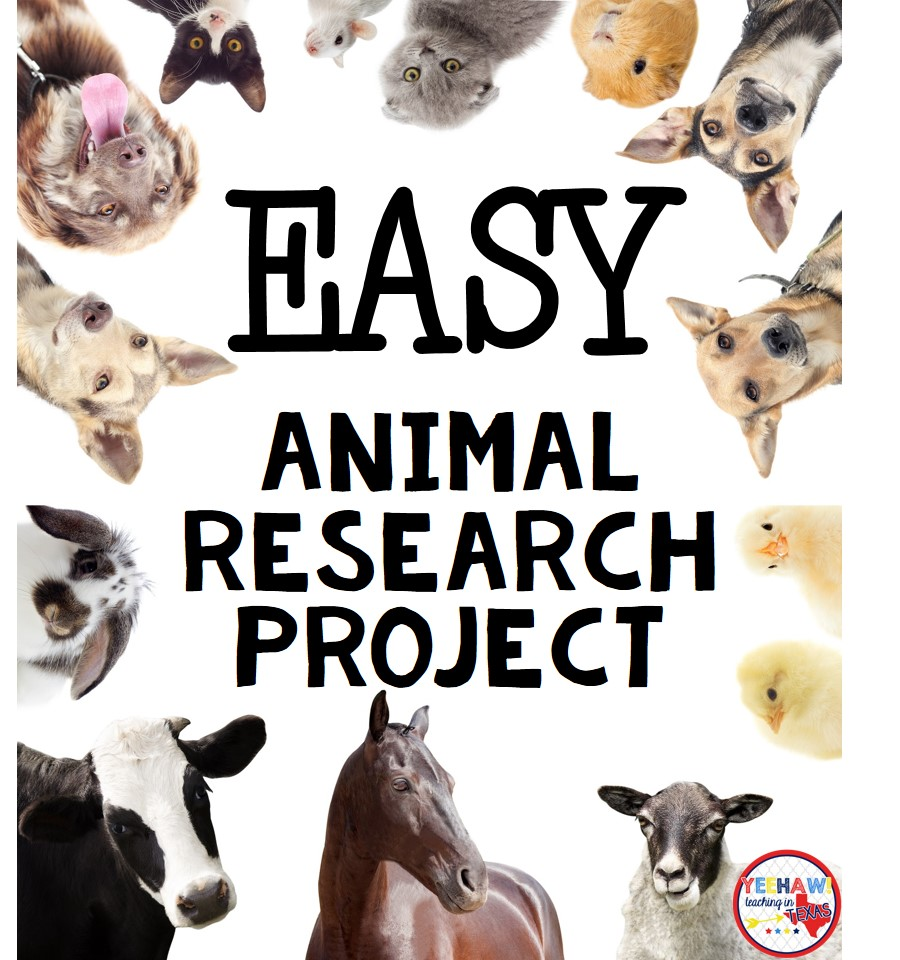 animal research project Animal studies give us a better understanding of disease development and prevention, as well as standards for normal and abnormal behaviorthe following animal project ideas introduce areas of animal studies that can be explored through experimentation.