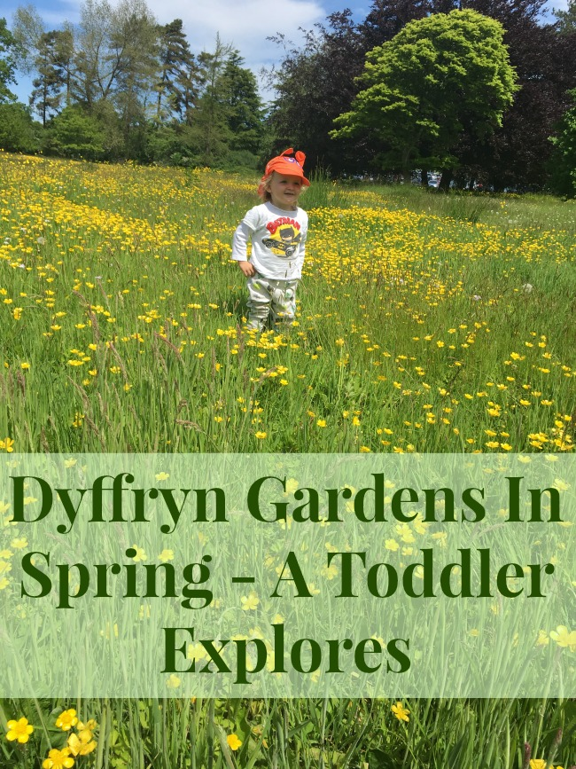 Toddler-in-field-of-buttercups-with-caption-saying-Dyffryn-Gardens-In-Spring-A-Toddler-Explores