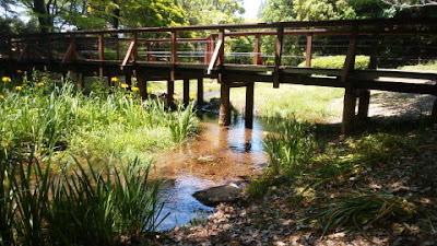 道保川公園 木製の橋