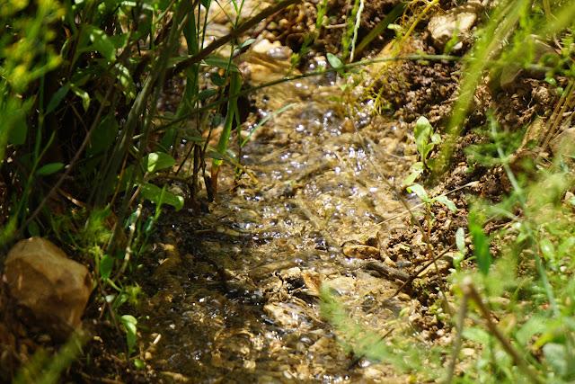 זרימת מים בעמק הצבאים